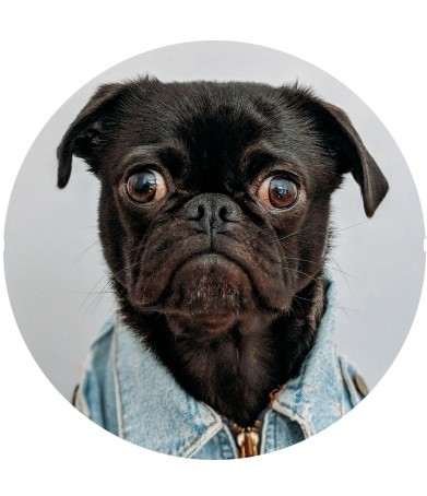 How To Create A Round Image In Photoshop - Round Photo of Bulldog