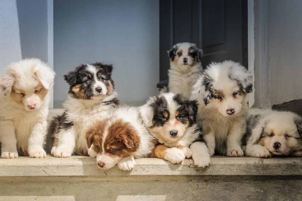 Picture of seven dogs