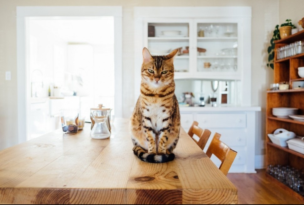 cat on table with kitchen in background