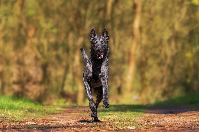 facts about shutter speed - dog running in woods