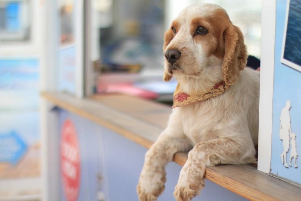 dog on window sill