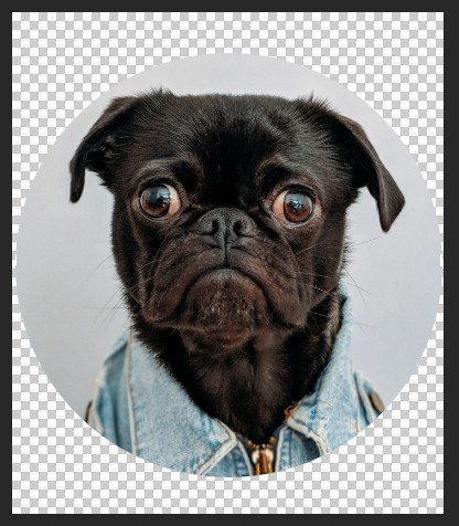 How To Create A Round Image In Photoshop - Bull Dog with Transparent Background