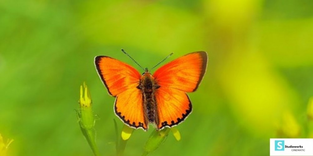 How To Photograph Flowers - Orange Butterfly