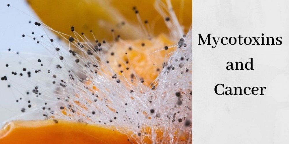 mycotoxins and cancer graphic with mold on orange fruit