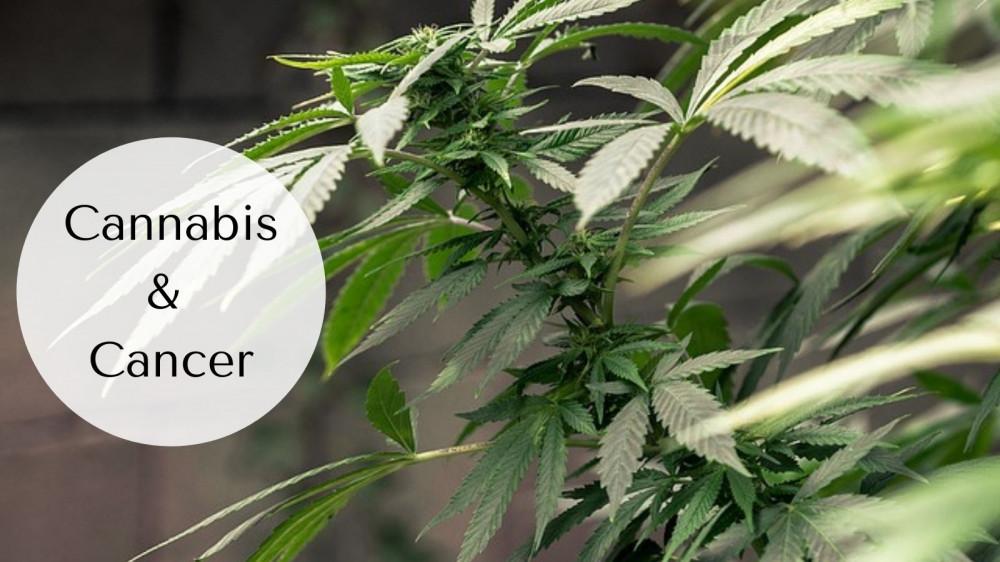 Cannabis and Cancer - Cannabis Leaves