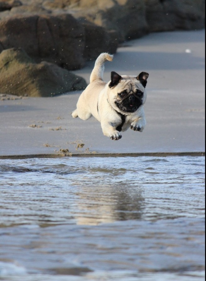 dog frozen in mid air