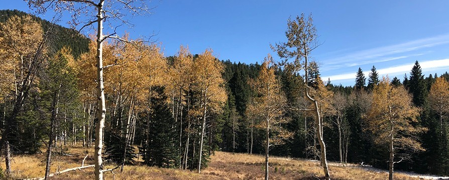 Aspen Colors on the Staunton Ranch Trail Loop