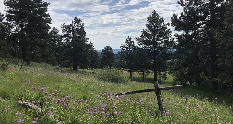 Elk Meadow, Evergreen, Colorado