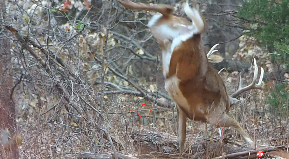 Crossbow Hunting Eight Point Buck