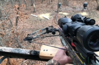 Crossbow for Wild Boar Hunting