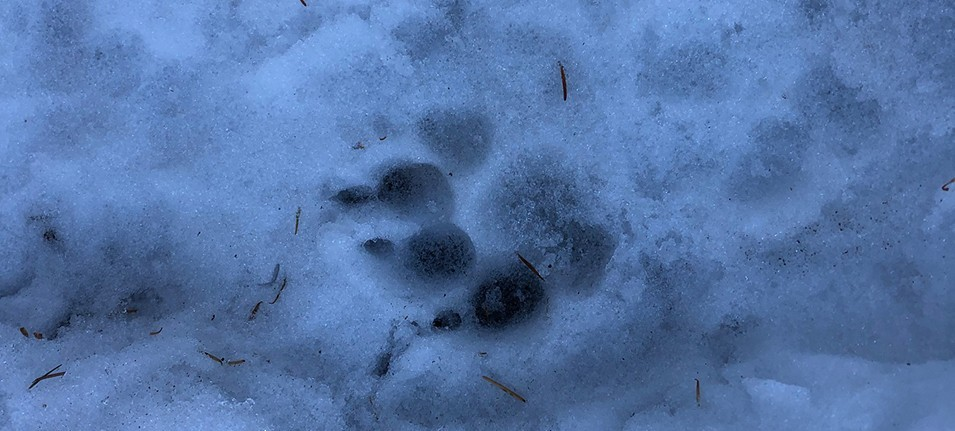 Legault Mountain Trail | Animal Tradk