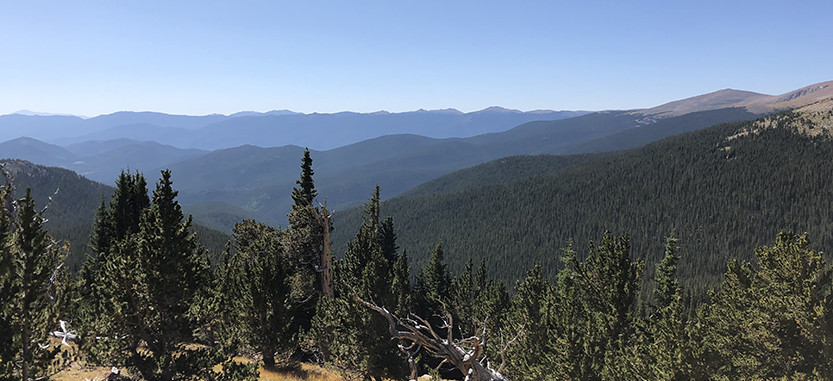 Tanglewood Trail