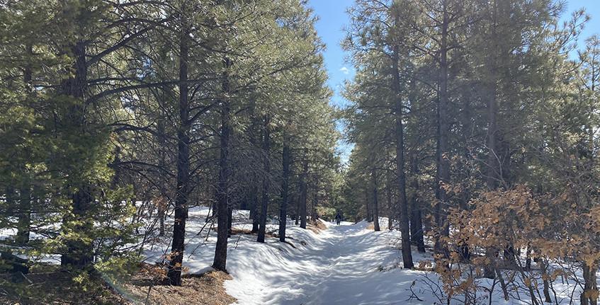 San Carlos Trail