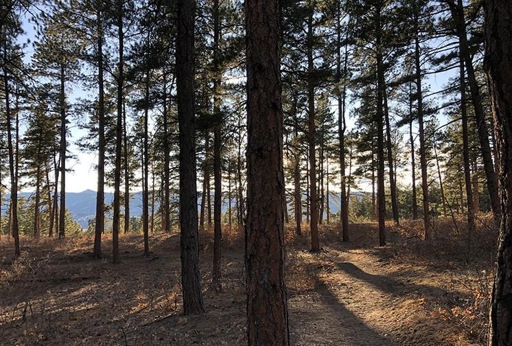 Dawson Butte Forest