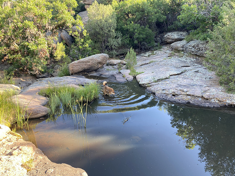 Ranger in a pool at Castlewood Canyon State Park