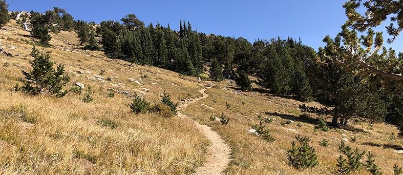 Tanglewood Trail - Upper Trail