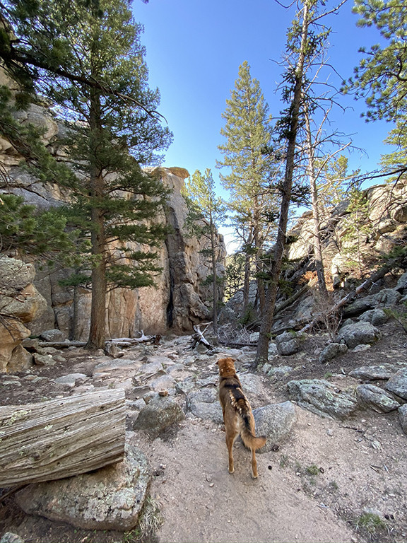 Eleven Mile Canyon Overlook Trail