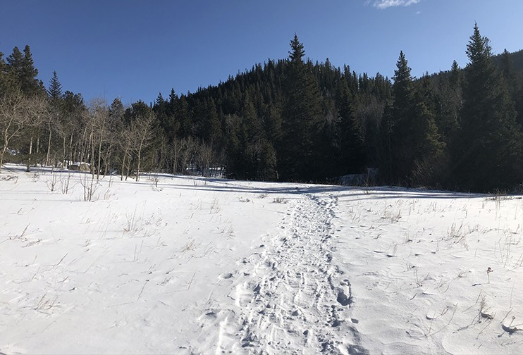 Raccoon Trail | Snowshoes Recommended