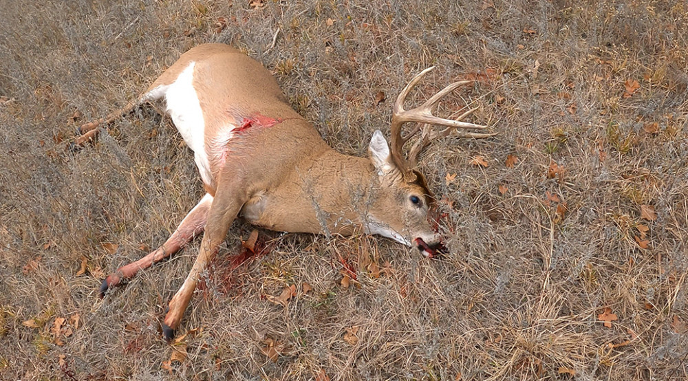 Large 8 Point Buck