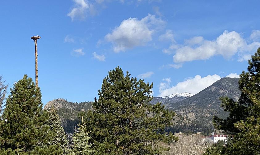 American Eagle Perch