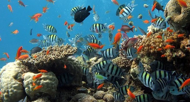 Coral Reef - Coastal Marine Ecosystem