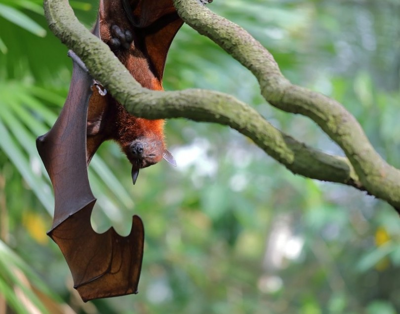 Wildlife and the Ecosystem