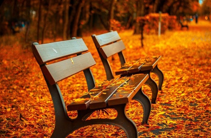 2 benches in the autumn sun