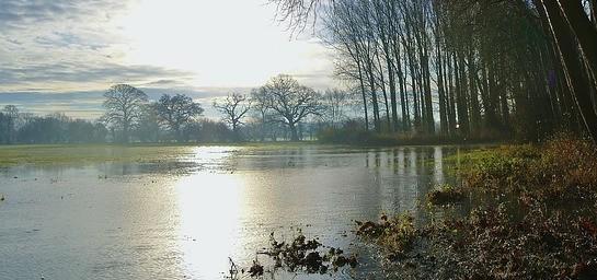 Flooded Field