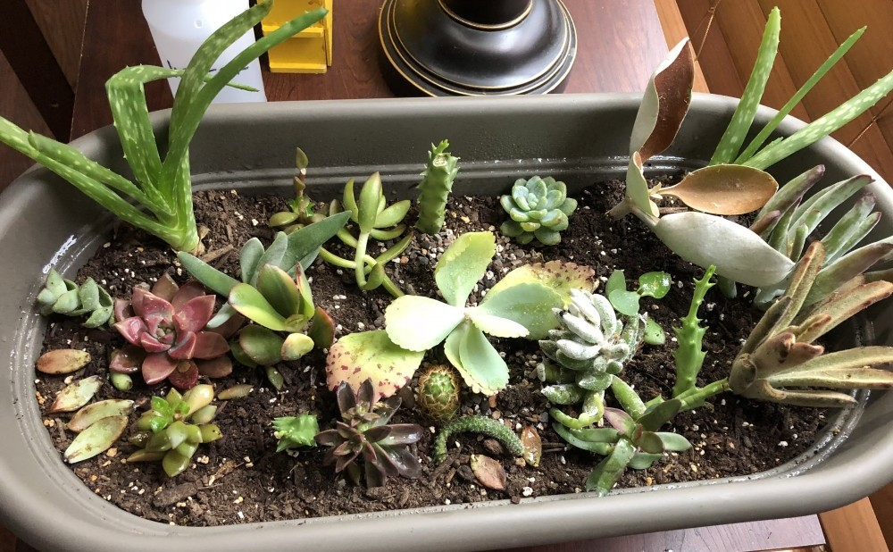 planted cuttings