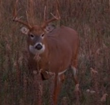 5 Deer Hunting Tips and Tricks to See More pressured Deer!