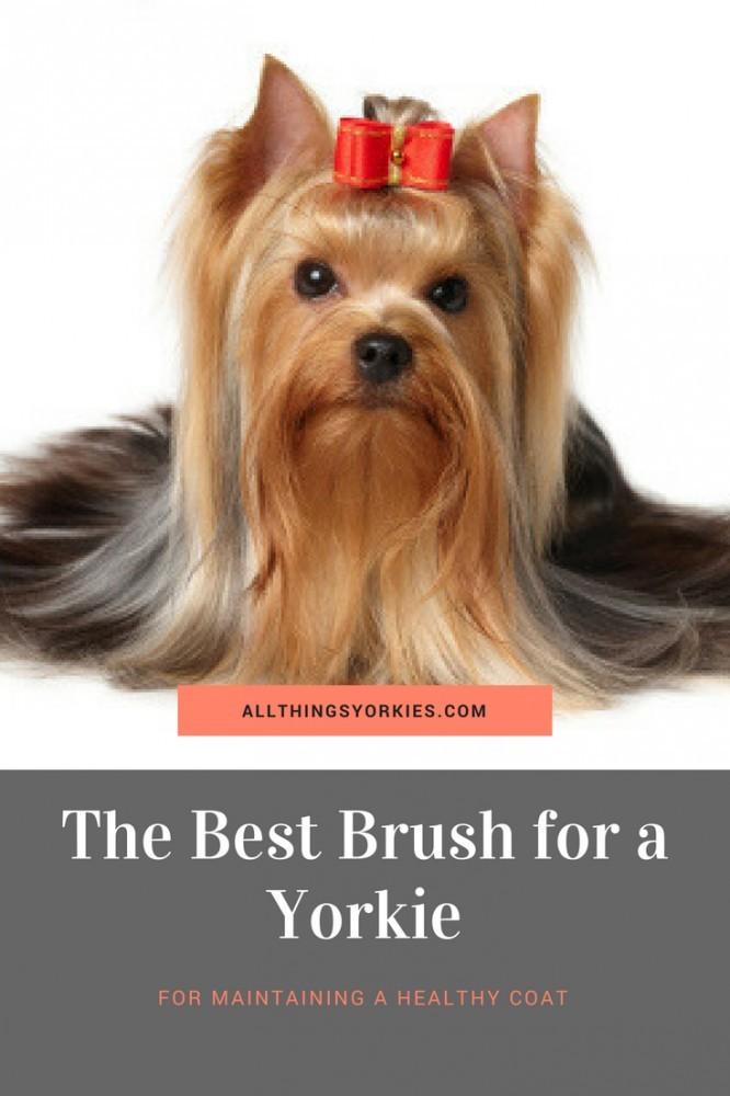 best-yorkie-brush
