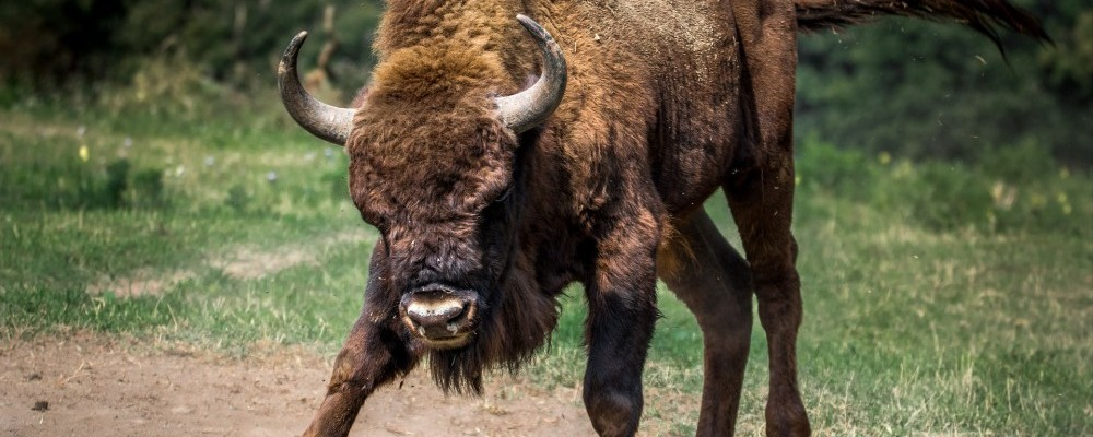 bull-healthy-ways-to-cope-with-anger