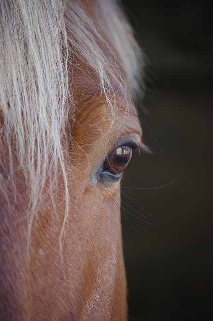 Horse head and eye close up