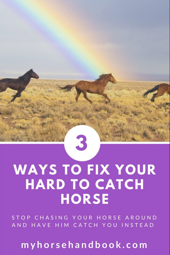 3 ways to fix your hard to catch horse graphic