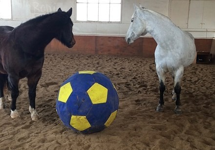 Horsemanship Ball