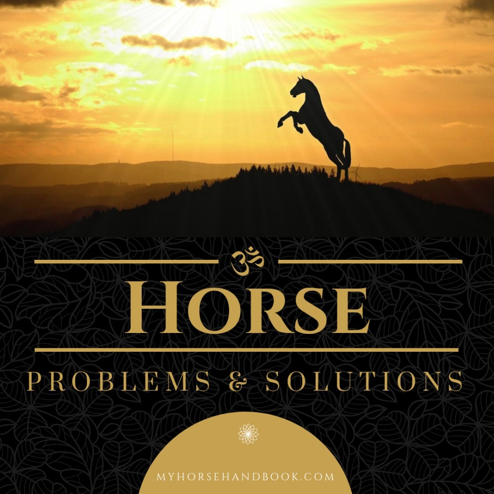 Horse problems & solutions blog graphic
