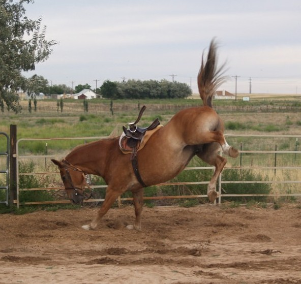 Bucking horse minus rider