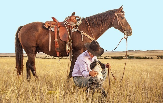 Cowboy and horse in paddock with dog