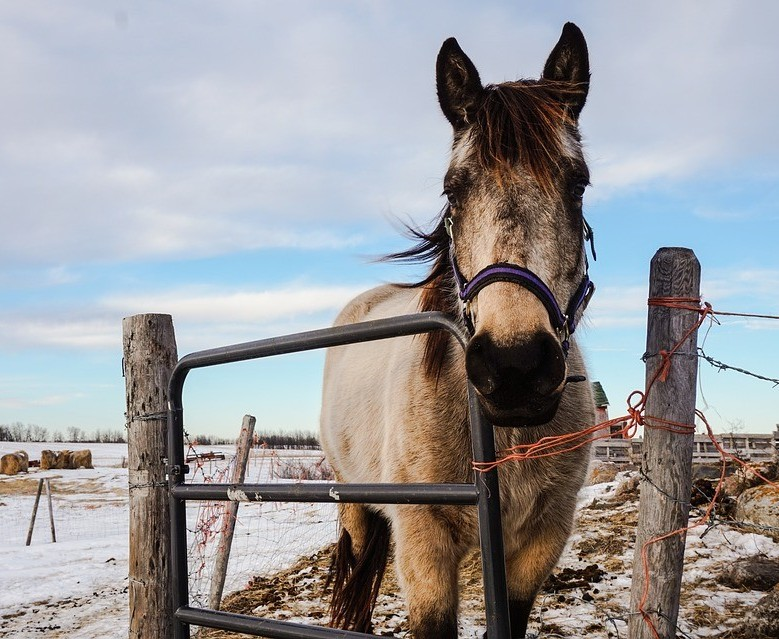 Horse at gate in snow