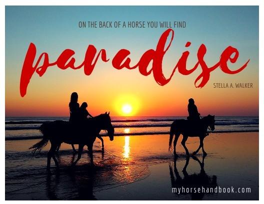 Inspirational Horse Quotes & Sayings | My Horse Handbook