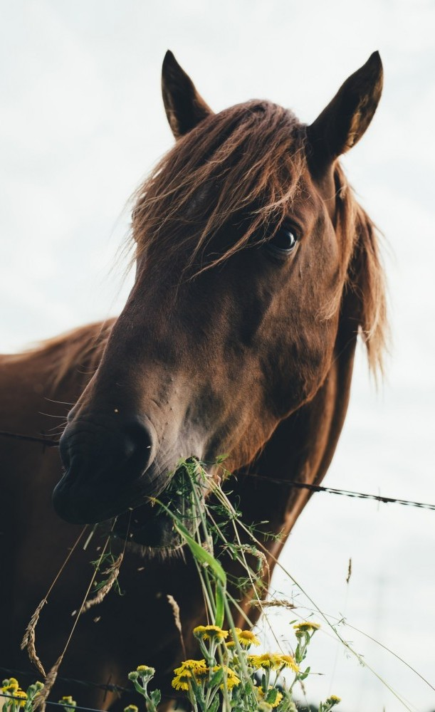 Best treatment for ulcers in horses | My Horse Handbook