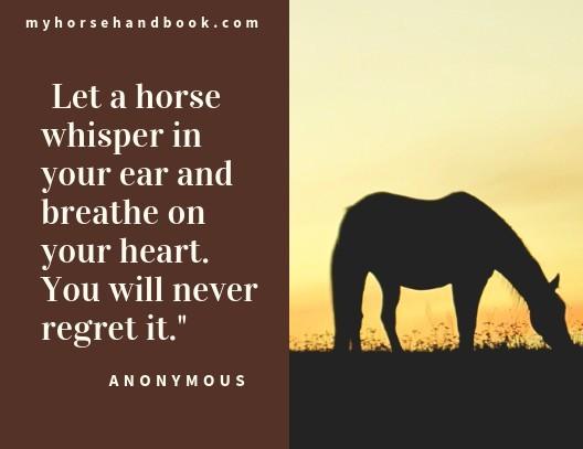 Inspirational Horse Quotes & Sayings   My Horse Handbook