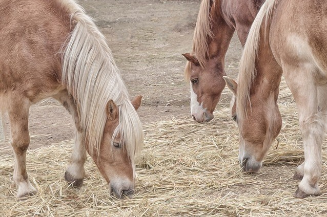 Grazing and gastric ulcers in horses
