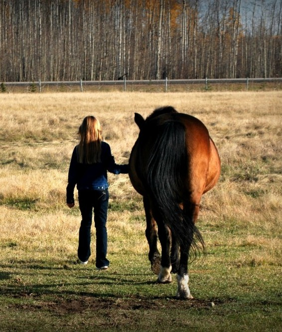 Girl leading horse in pasture
