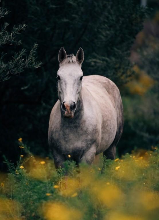 Horse at peace