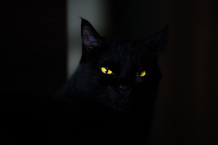 Scary cat hiding in a dark background.