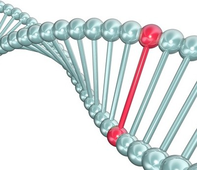 mthfr gene mutation testing