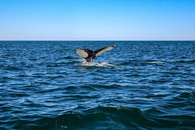 What to Do In Tonga -- Marine Life