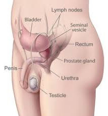 Prostate do prostate supplements work