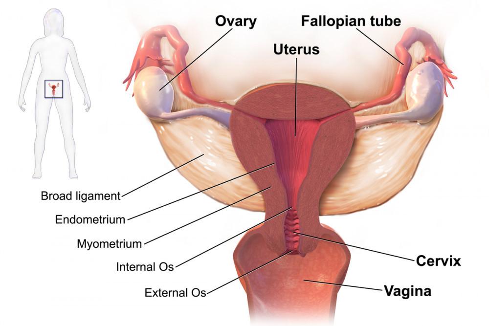 Naturally shrink uterine fibroids